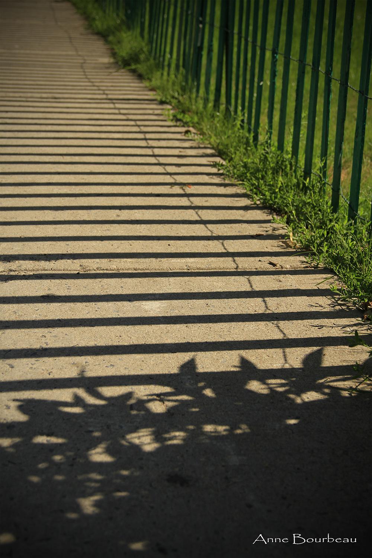 cours_de_photo_monteregie_rivesud